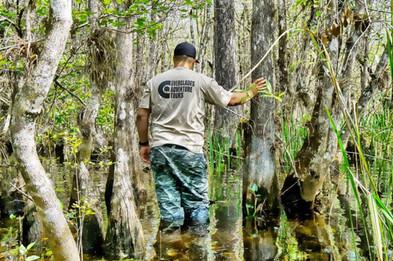 Swamp Hike