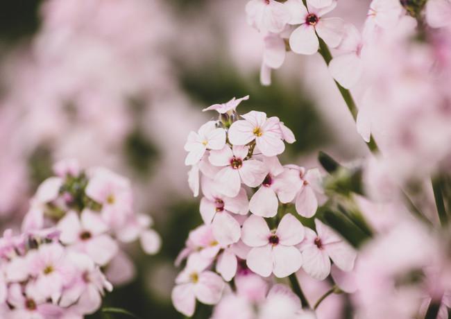 Makro Blumen