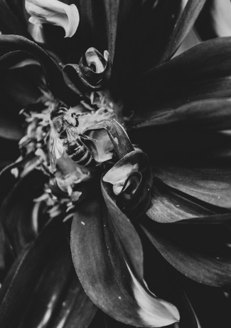 Makro Blume