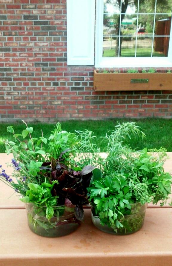 Harvested herbs