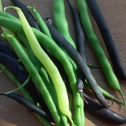 tricolored beans_edited.jpg