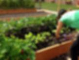 raised bed organic garden