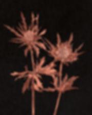 fleurs rgb 300 dpi (5).jpg