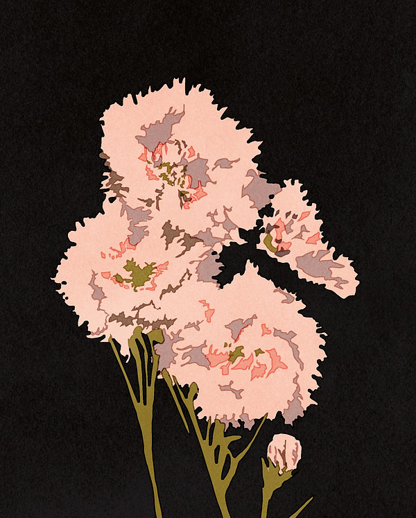 illustration riso print beautiful decorative flower black background pink carnation close up