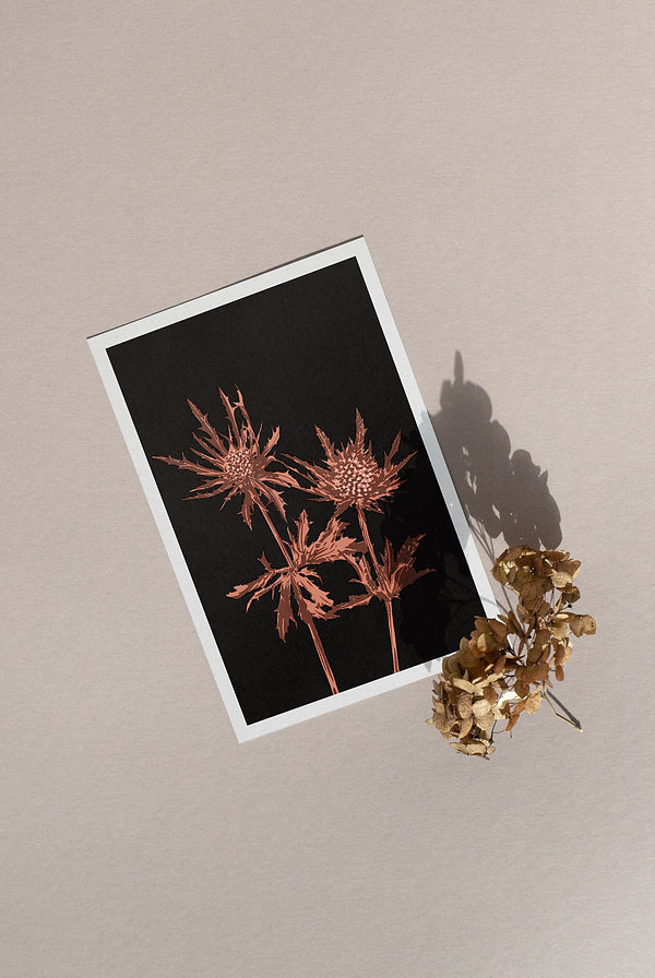 illustration riso print beautiful decorative flower black background close up thistle artwork gift printed