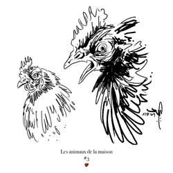 ANIMAUX_DE_LA_MAISON_003