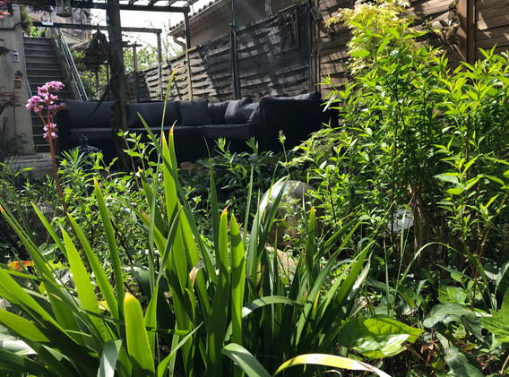 La terrasse baignée de végétation