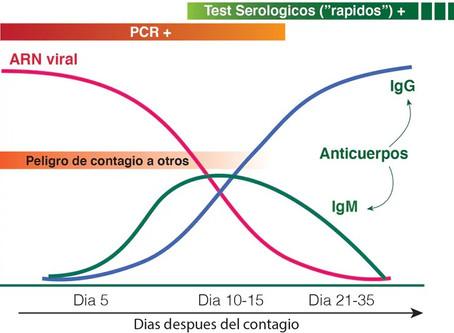 Test rápidos IgG/IgM y Test PCR ¿cuándo usarlos?