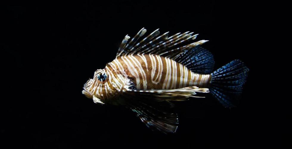 Deep fish 980 500.png