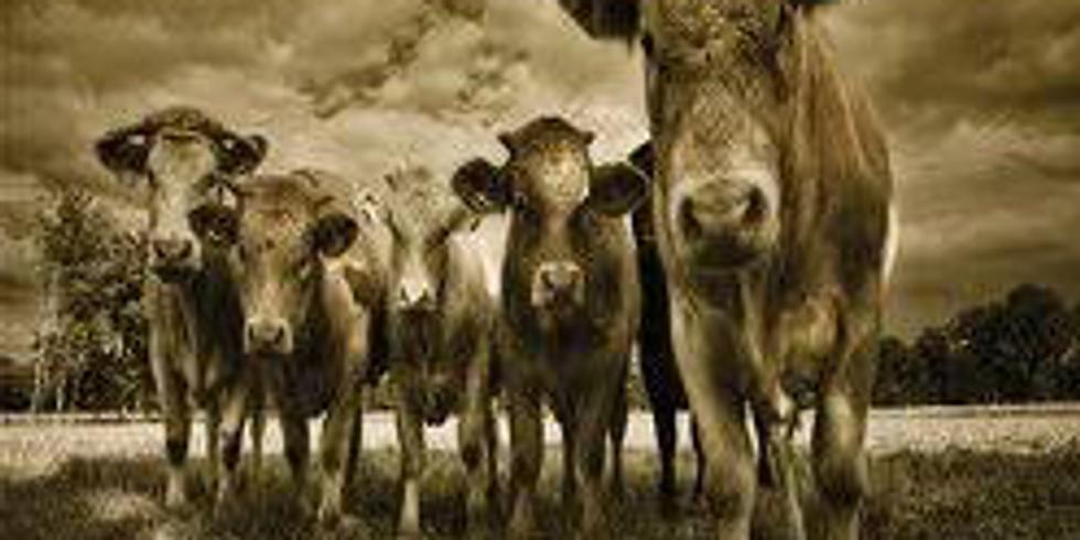 The Casey Thompson Band-Mule Barn