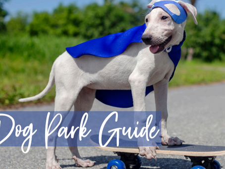 North DFW Dog Park Guide