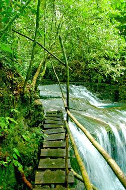 Jungle Walk, Guatemala