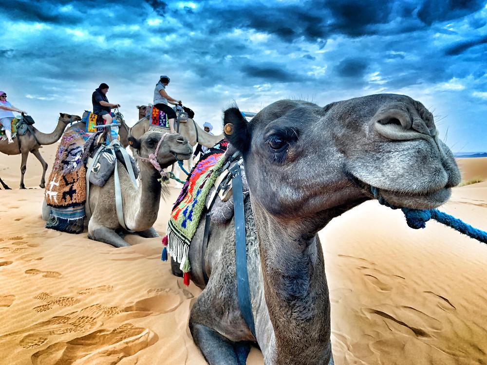 モロッコ 砂漠 ツアー