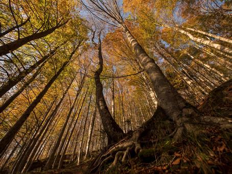 Colori autunnali (fall foliage) nel Parco delle Foreste Casentinesi - Istruzioni per l'uso!