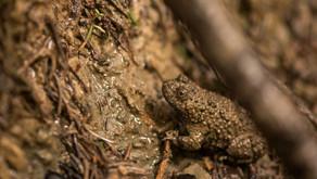 La biodiversità delle zone umide