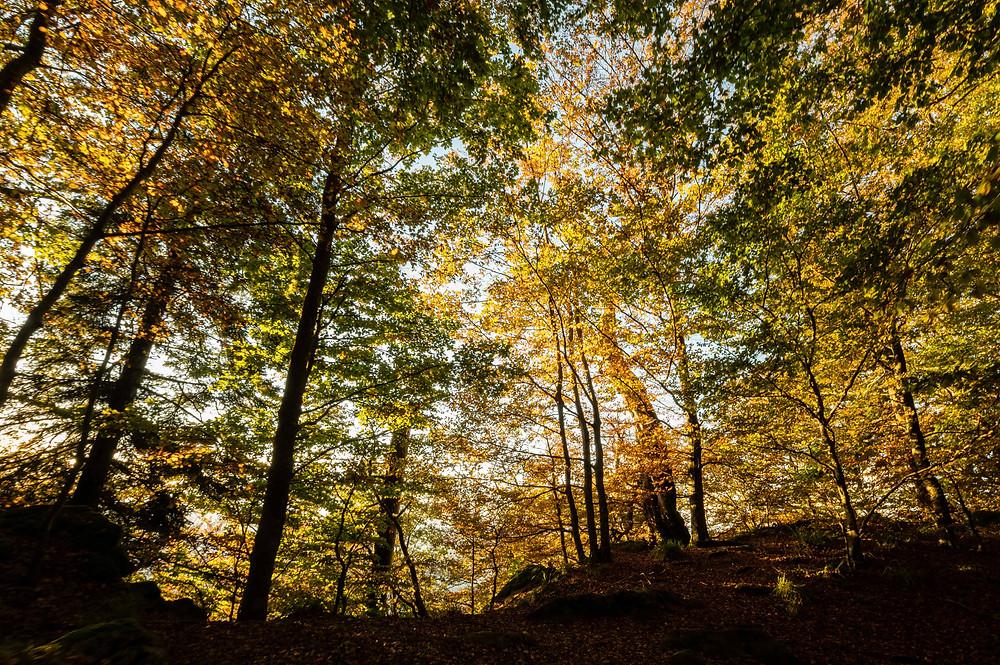 Fall Foliage alla Rupe della Verna intorno al 20 ottobre Parco Nazionale Foreste Casentinesi