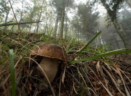 Di funghi e fungaioli