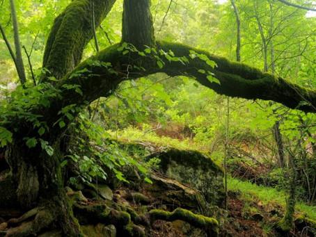 Perchè abbiamo bisogno delle Foreste Vetuste