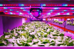 Plant growth LED light
