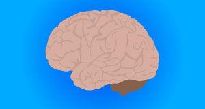 brain illustration blue background