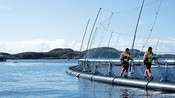 SIGNIFY AND SCALEAQ PARTNER UP IN SUSTAINABLE FISH FARMING