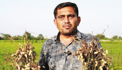 UPL INCREASES YIELD AND OIL CONTENT IN GROUNDNUT CROP,BRINGS SAMRIDDHI TO 50,000 FARMERS