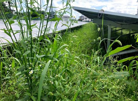 長梅雨で行えなかった太陽光発電所の除草を完了しました!