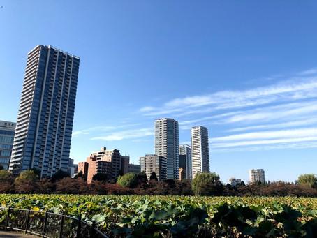 11月ですね~!上野公園も秋を感じます