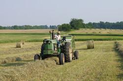 Farm 2011 (22)