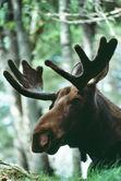 Wildlife Charities