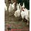 Thumbnail: Plymouth Rock Branca - ovos férteis, galados - Unidade - Compre 12 e leve15