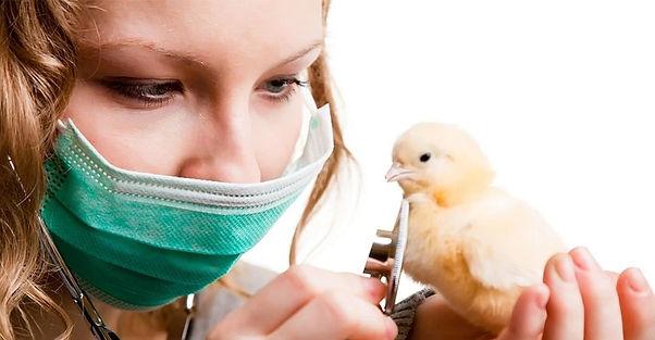 vet-looking-at-chick_edited.jpg