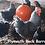 Thumbnail: Kit Promocional FRETE GRÁTIS MG - 60 ovos de Raça Pura