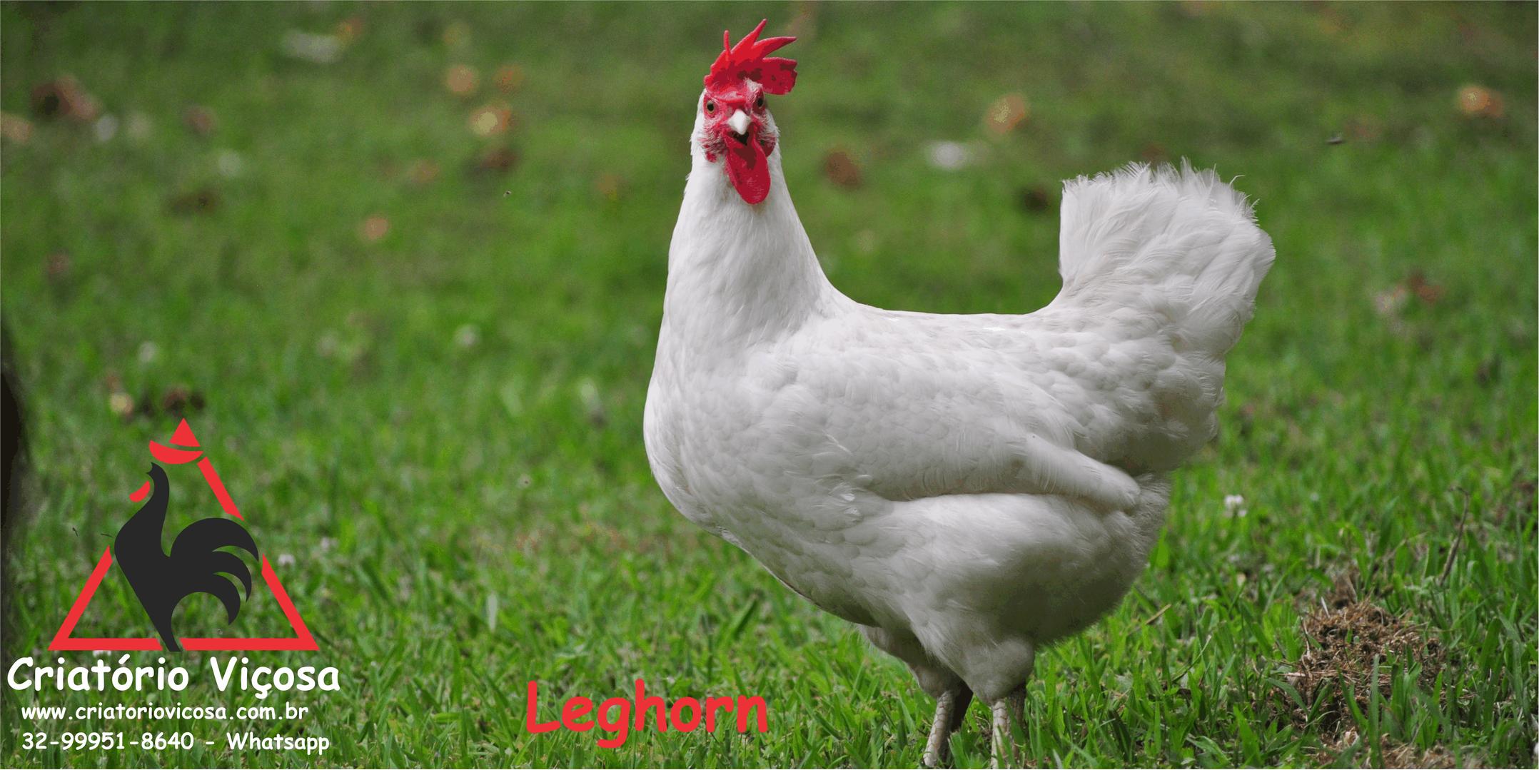 Leg - 4.png