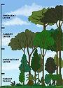 Rainforest Caracolarte.jpg