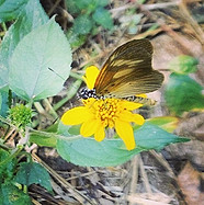 Butterfly 🦋 on the forest floor #biodiversity #butterfly #lepidoptera #forest #rainforest #botanical #education #conservation #crgp #africa_