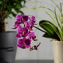 Orchidea_DSC1108.jpg