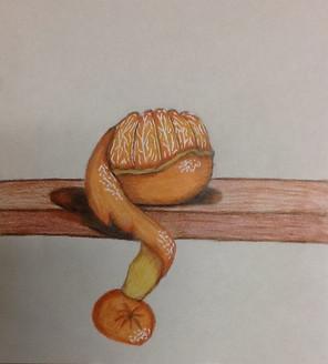 by Brady Hale colored pencil 8th grade