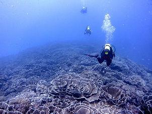 Misali Diving.jpg