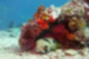 Shanes Reef 2.jpg