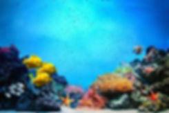 zanzibar-coral-reef.jpg