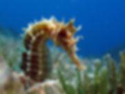 Shanes Reef.jpg
