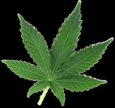 cannabis-leaf-4.png