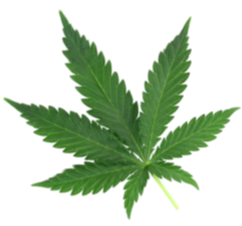 cannabis-leaf-2_edited.png
