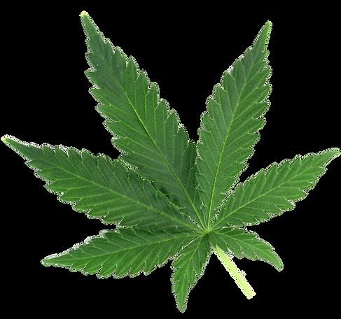 cannabis-leaf-2.png