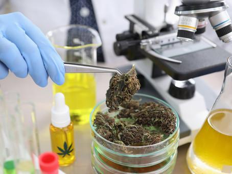 Understanding Cannabinoid Oil Distillation Vs. Isolate Processing