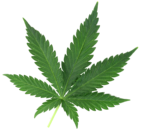cannabis-leaf-4_edited.png