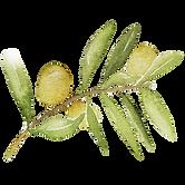 IanMikraz-Watercolor-Olive-Illustration-