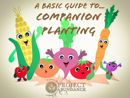 A Basic guide To.... Companion Planting!
