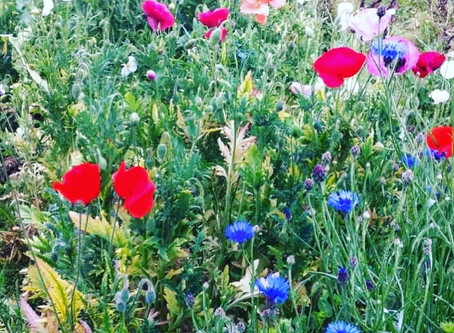 FREE BIRD AND BUTTERFLY WILDFLOWER MIX